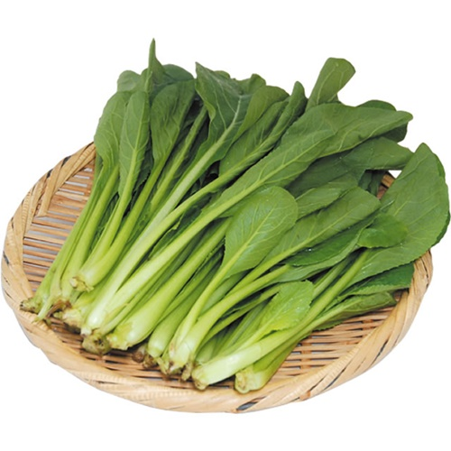 小松菜 ※有機/農薬不使用
