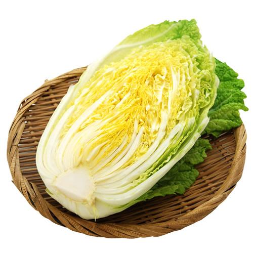 白菜 ※有機/農薬不使用