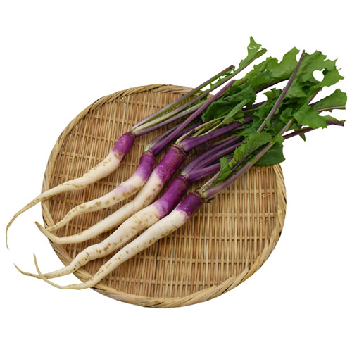ひの菜かぶ ※有機/農薬不使用